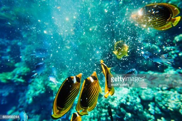Egyptian wild life fotograf as e im genes de stock getty - Fotos de peces tropicales ...