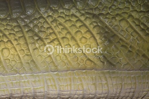 Background or reptile wallpaper Detail of the skin of a wild animal