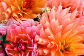 Floral background of autumn dahlias in local market