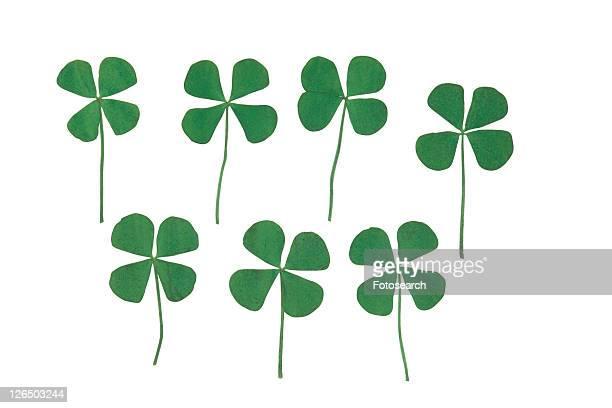 background, plant, green, four-leaved clover, flower, leaf