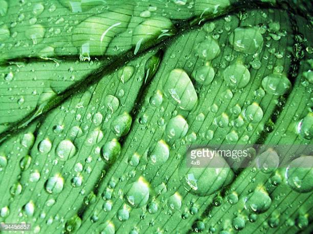 Hintergrund-Regen-Tropfen auf Blatt