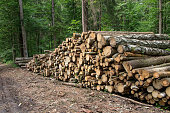 Background stack of logs in the forest, side view.