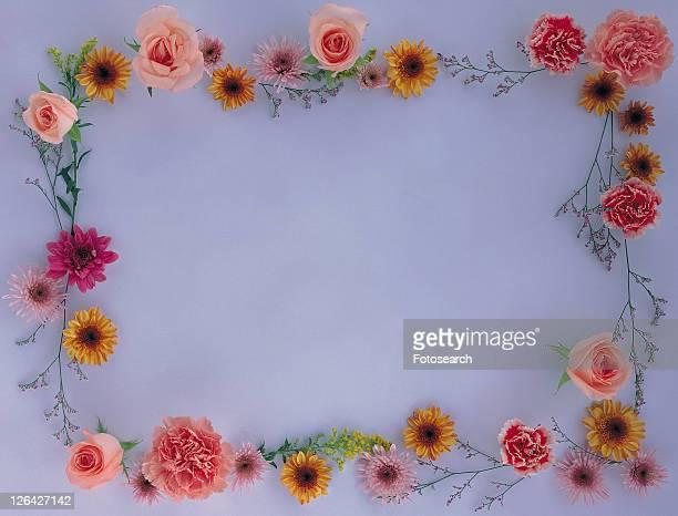 background, sun flower, square, border, frame, rose, leaf