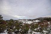 Background winter forest