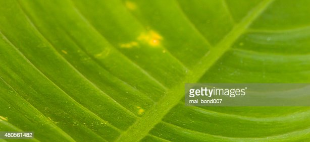 Backgrounds is on the nature : Stock Photo