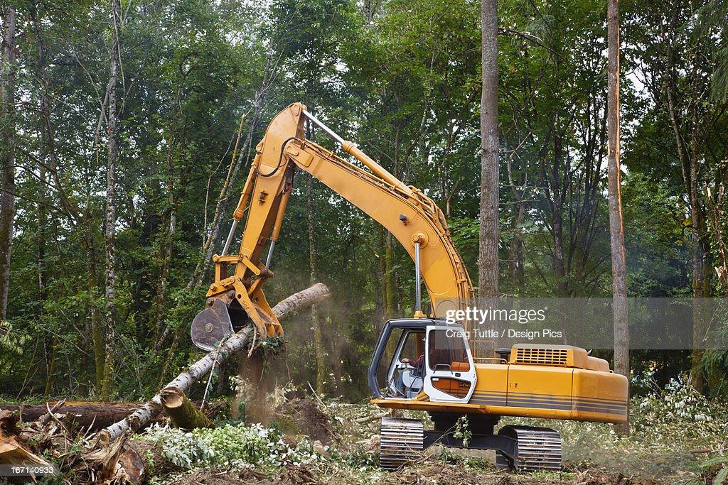 A Backhoe Moves Cut Trees
