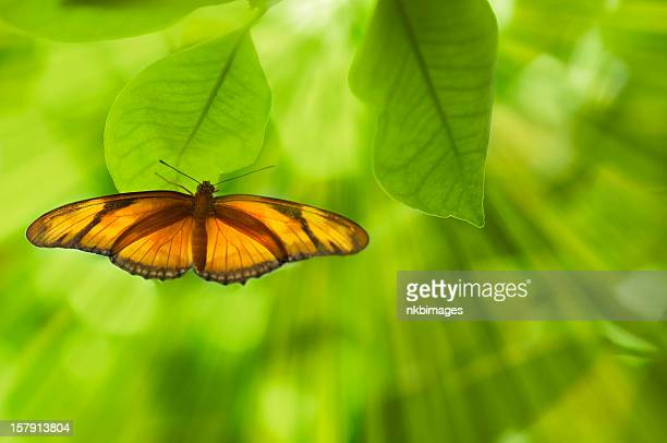 Backlit butterfly on fresh green leaves