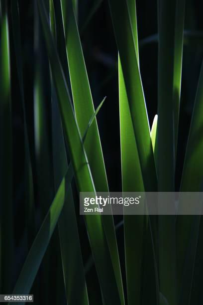 Backlit leaves in vertical format on black background