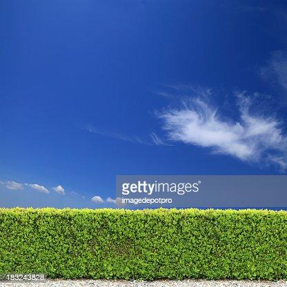 backyard bush fence over clear sky