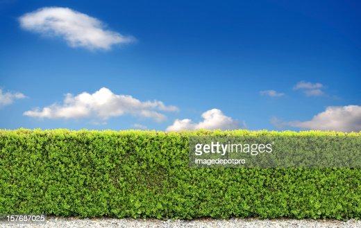 backyard bush fence