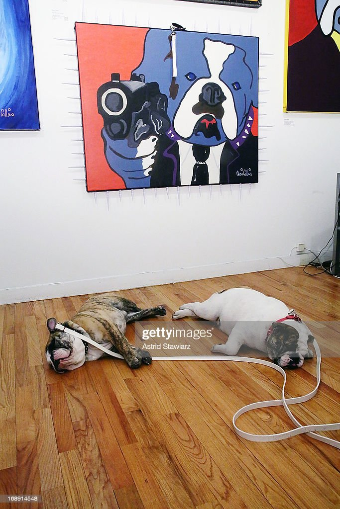'Bacon' the bulldog and 'Marshmallow' the bulldog attend Chris Collins 'Top Dogs' VIP Reception on May 16, 2013 in New York, United States.