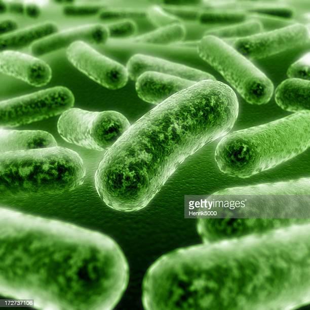 Bacterias en primer plano