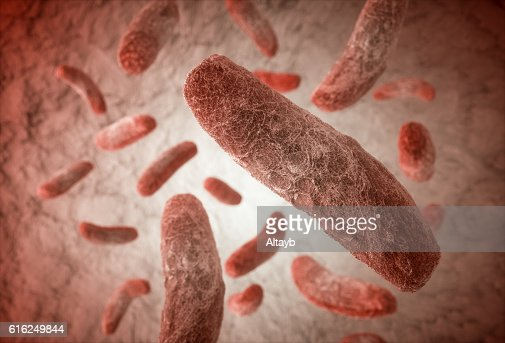 Bacteria : Stock Photo