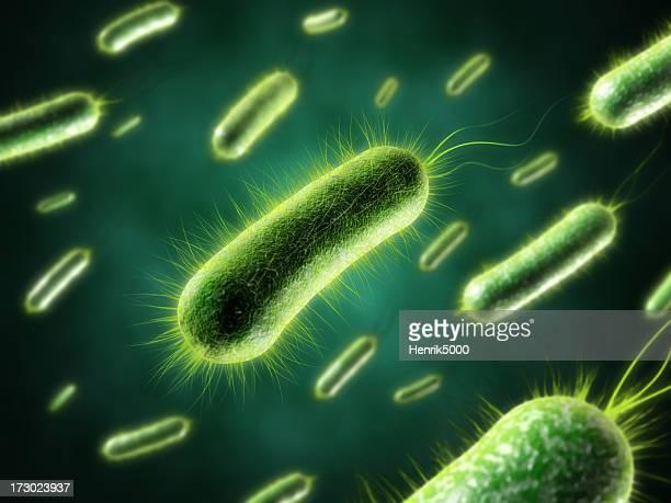 Bactéries avec gros plan de fourrure
