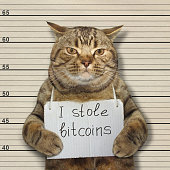 The bad cat stole a lot of bitcoins.