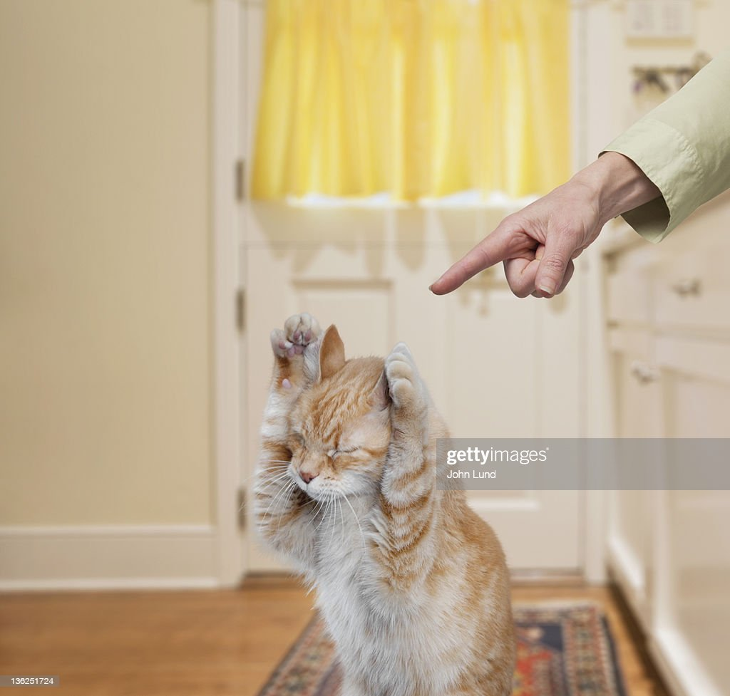 Bad Kitty : Stock Photo