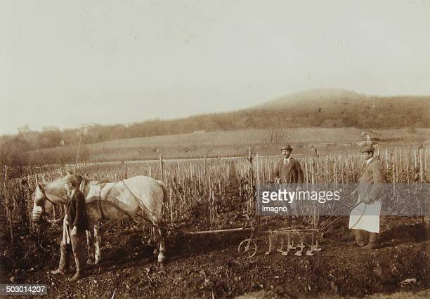 Bad Vöslau Working in vineyards with horses of the wine dynasty Schlumberger About 1900 Photograph by studio Helios / Vöslau
