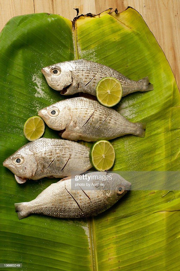 Badha fish : Stock Photo