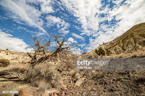 Badlands formations juniper snag and sagebrush under a desert sky : Stock Photo
