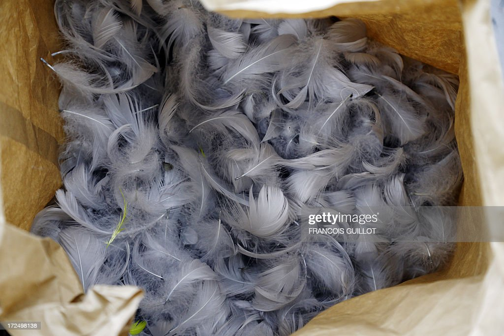 A bag of feathers is seen on June 17, 2013 at the Maison Lemarie, in Paris. Founded in 1880 and purchased by Chanel in 1996, Lemarie is one of the last artisanal house remaining in France which is specialized in feathers and flowers for haute couture. AFP PHOTO / FRANCOIS GUILLOT