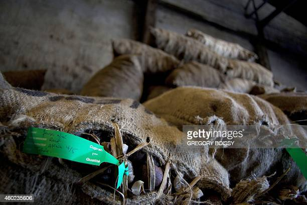 LEYRAL Bags of copra the flesh of the coconut are seen at the oil mill of Papeete on December 9 2014 10000 tons of copra are delivered annually to...