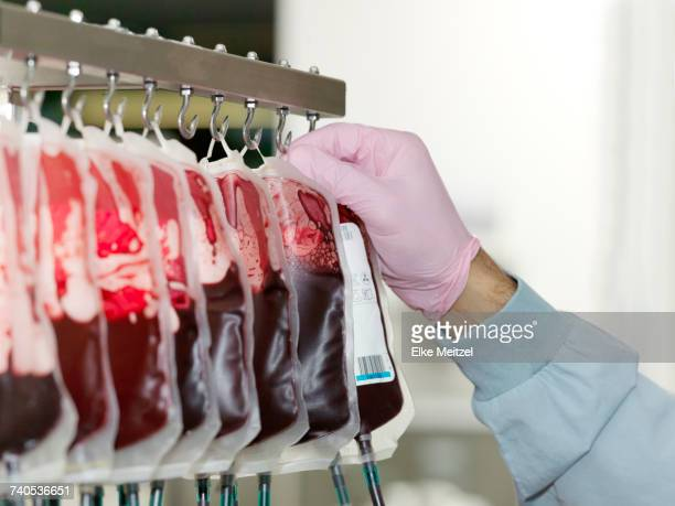 Bags of donated blood hanging in processing facility of blood bank