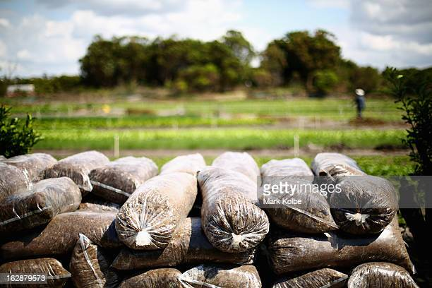 Bags of fertilizer are seen at Kyeemagh Market Gardens on February 4 2013 in Sydney Australia The gardens located approximately 10km from the Sydney...