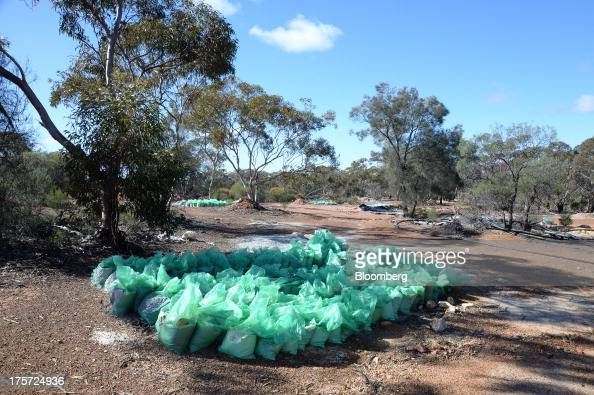 Bags of soil samples sit in rows at the Phoenix Gold Ltd Castle Hill gold project in Kunanalling northwest of Kalgoorlie Australia on Tuesday Aug 6...