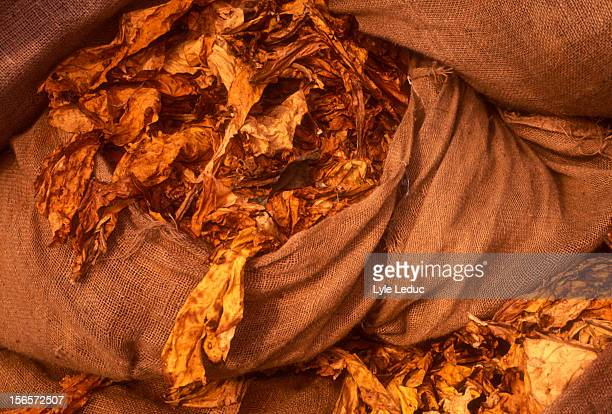 Bags of tobacco leaves