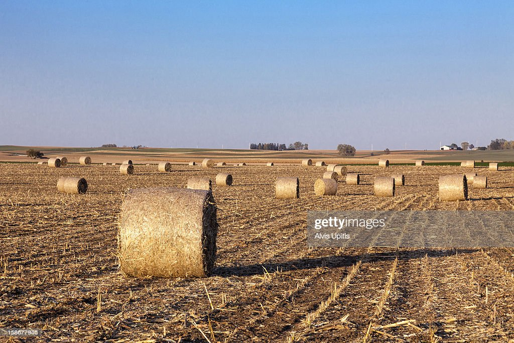 Bailed corn stalks in a Minnesota field : Stock Photo