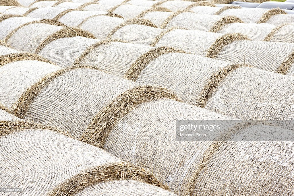 bails of hay stored in long lines : Stock Photo