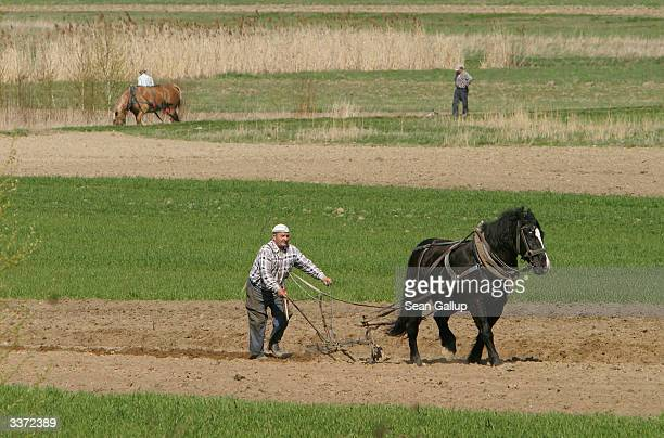 Baka Mieczyslaw and his horse Kubusz plow the plot of land he owns April 15 2004 in Jastew Poland Many rural Poles farm small plots to provide...