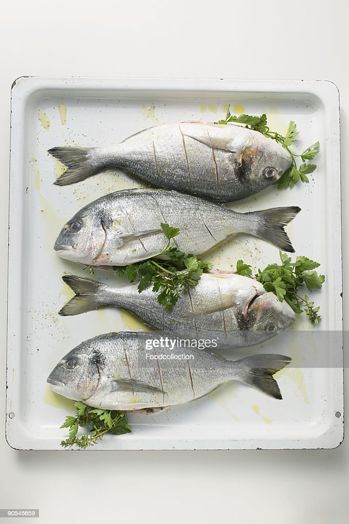 Baking tray with row of sea bream, overhead view : Stock Photo
