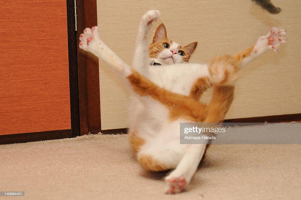 Balancing cat
