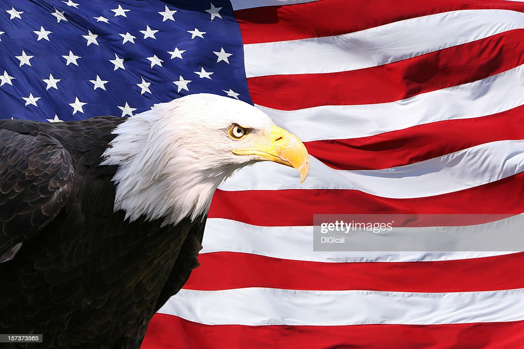 bald eagle american flag stock photo getty images