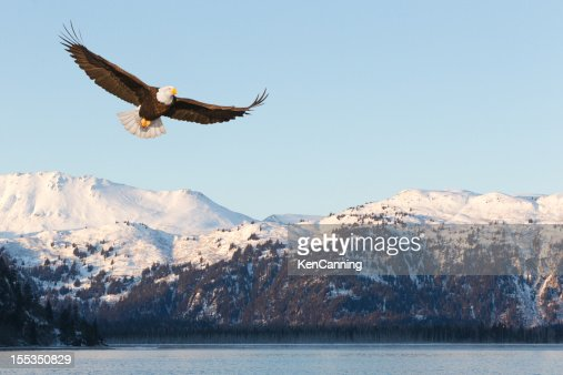 Bald Eagle and Snow Covered Mountains