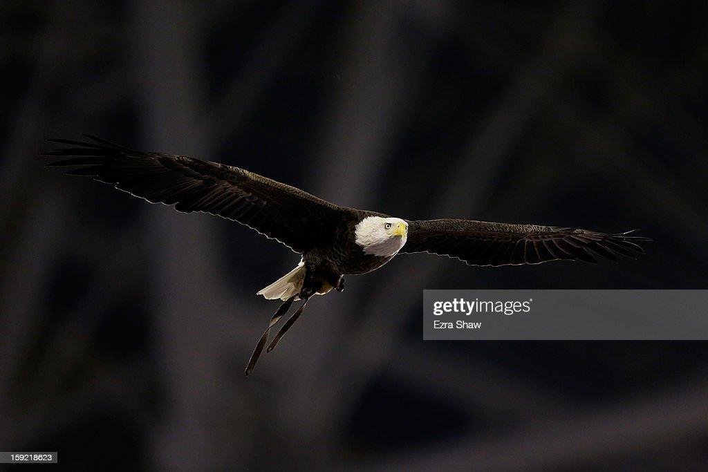 A Bald Eagle flies prior to the start of the Tostitos Fiesta Bowl between the Oregon Ducks and the Kansas State Wildcats at University of Phoenix Stadium on January 3, 2013 in Glendale, Arizona.