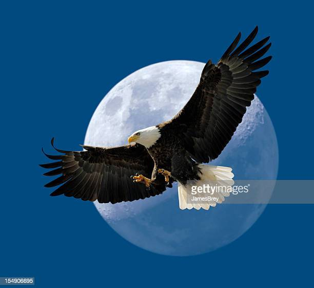Bald Eagle Flying In Front of Moon, Wings Spread