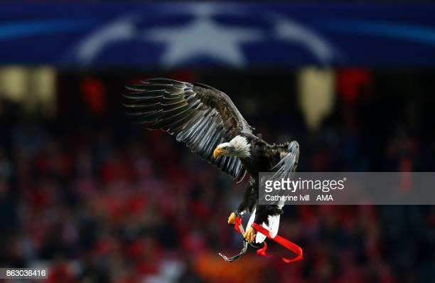 A bald Eagle mascot of SL Benfica during the UEFA Champions League group A match between SL Benfica and Manchester United at Estadio da Luz on...