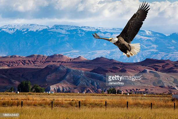 Bald Eagle Swoops Low Over Dramatic Western Landscape