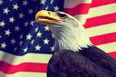 Portrait of a Bald Eagle in the background American flag.