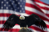 US Flag and Blue SkyBald Eagle with Flag United States of America
