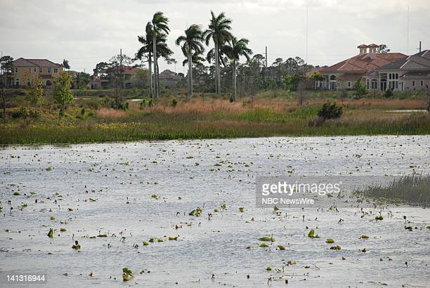 Bobby Ginn's protected site for bald eagles at his Tesoro community in Port Saint Lucie FL on March 3 2008 Property owner Bobby Ginn and Audobon of...