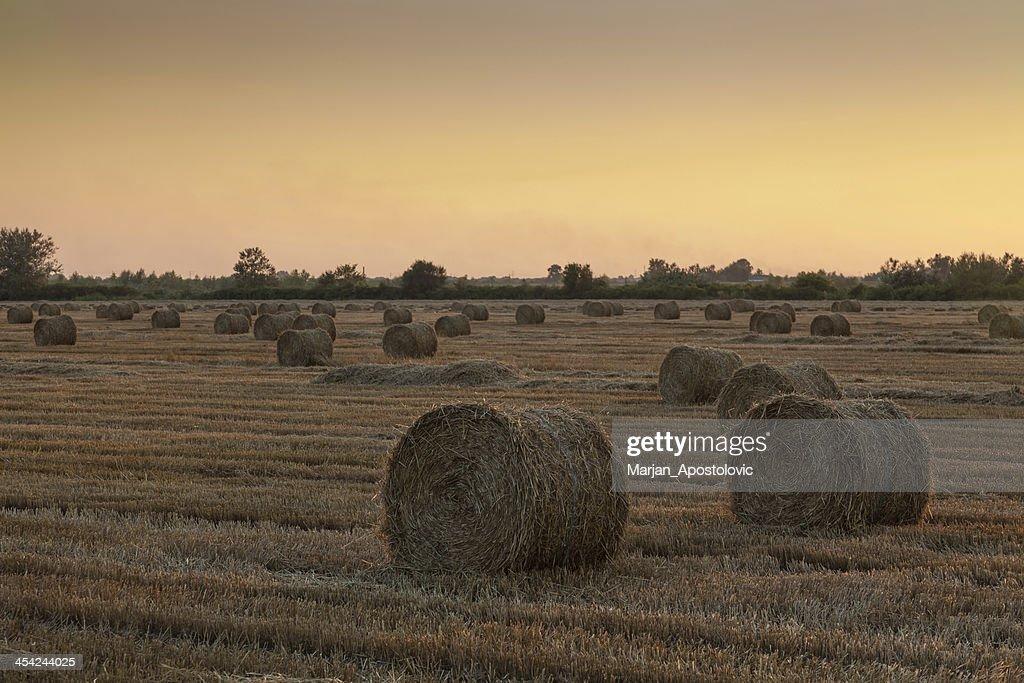 Bale of Hay : Stock Photo