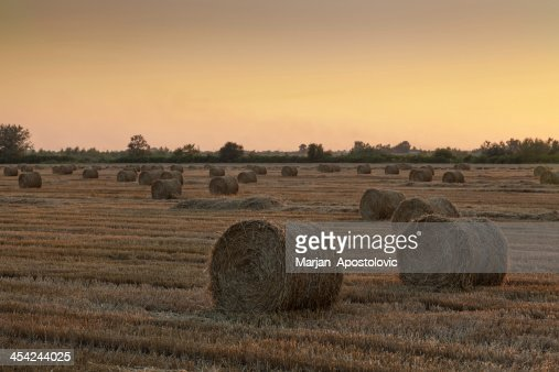 Bale of Hay : Stock Photo