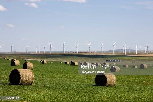 Bales next to wind turbines : Stock Photo