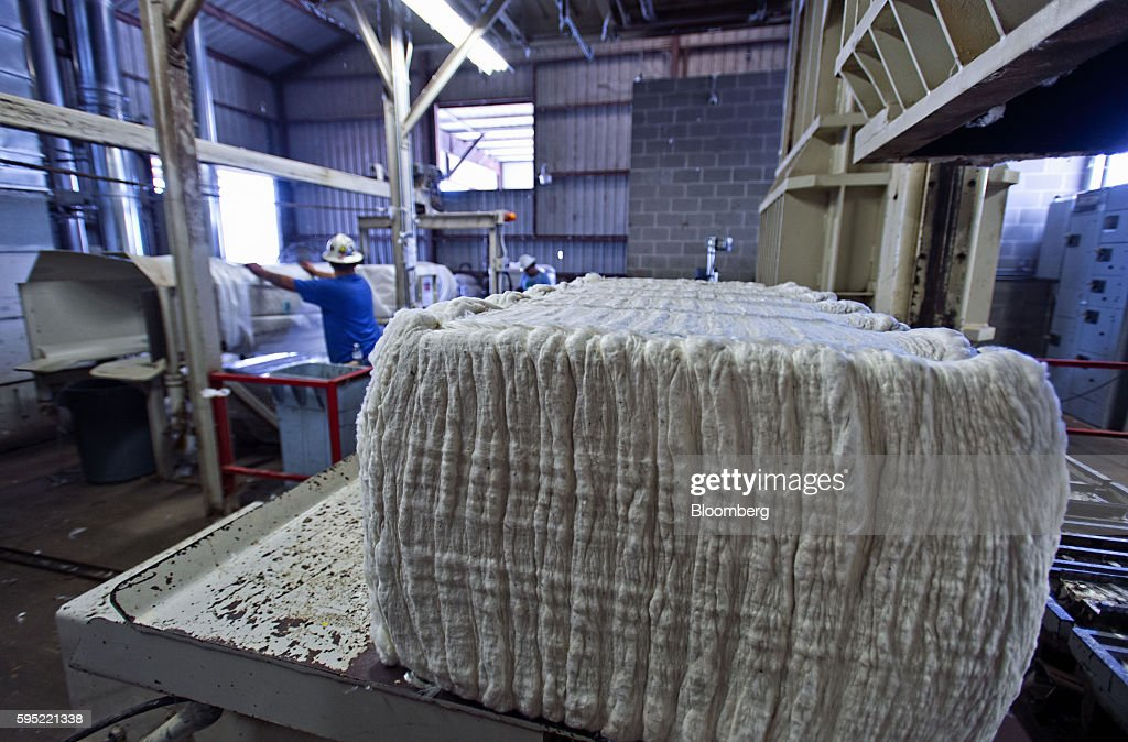 Bales of ginned cotton sit at the Gulf Coast Cooperative gin in the Nueces County of Bishop, Texas, U.S., on Wednesday, Aug. 24, 2016. The United States Department of Agriculture (USDA) estimates US export sales of 18,500 bales for cotton in 2017-2018. Photographer: Eddie Seal/Bloomberg via Getty Images