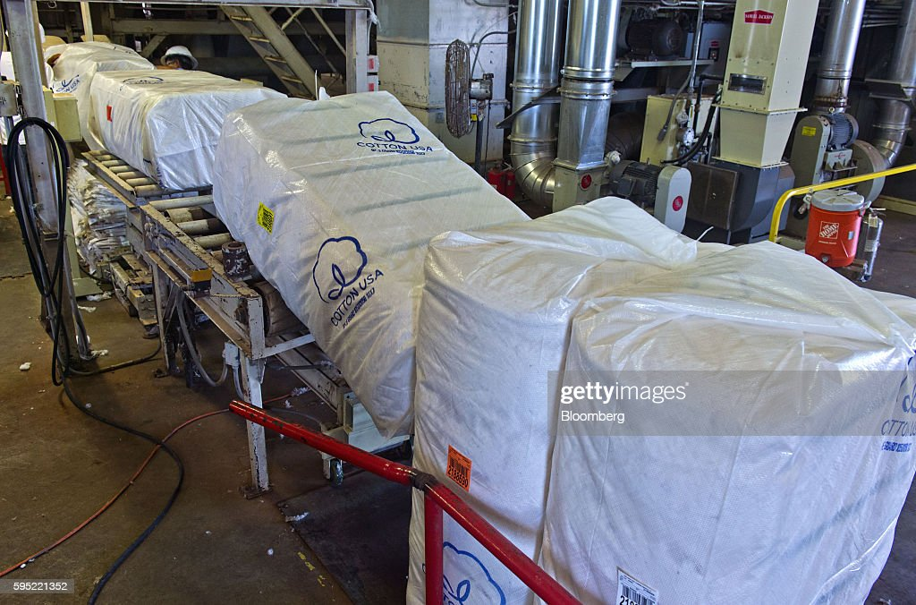 Bales of ginned cotton sit inside shipping bags marked with 'Cotton USA' logos at the Gulf Coast Cooperative gin in the Nueces County of Bishop, Texas, U.S., on Wednesday, Aug. 24, 2016. The United States Department of Agriculture (USDA) estimates US export sales of 18,500 bales for cotton in 2017-2018. Photographer: Eddie Seal/Bloomberg via Getty Images