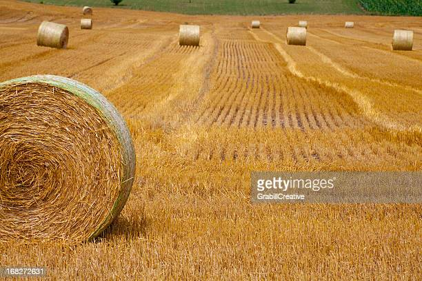 Bales of Golden Hay Dot the Autumn Field