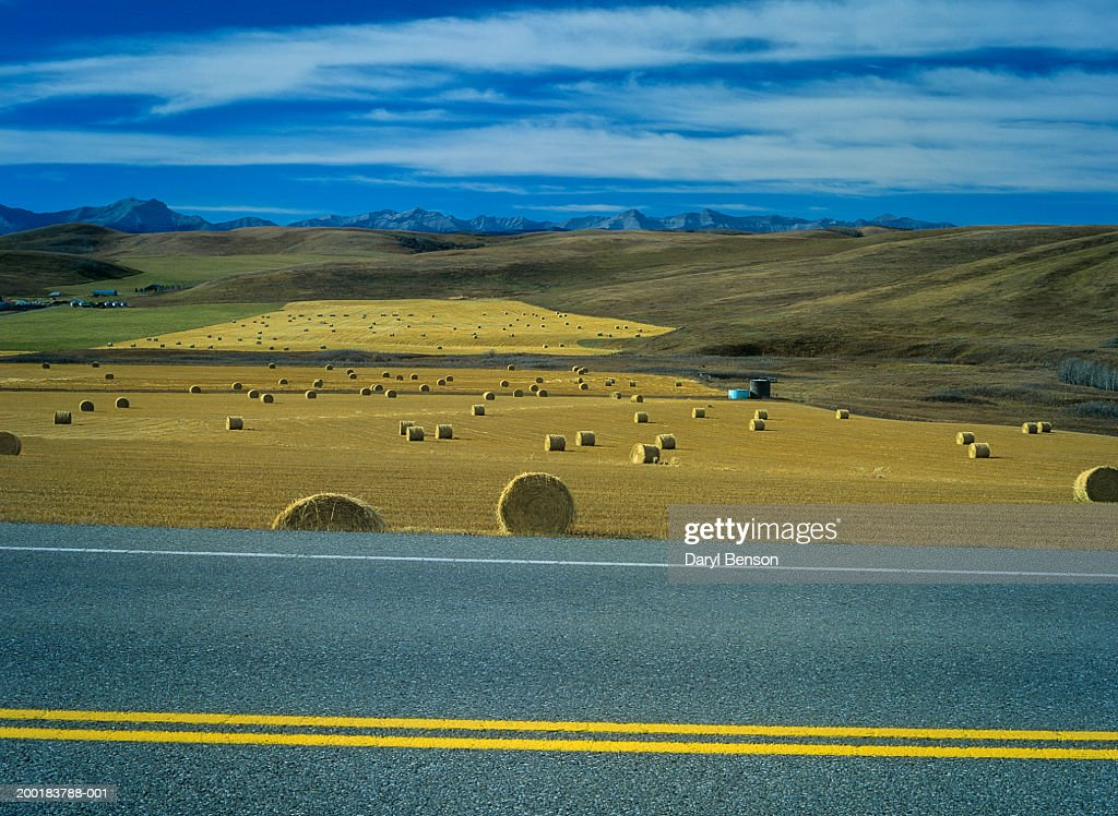 Bales of hay along roadside, side view : Stock Photo